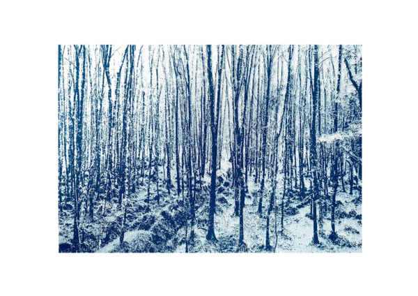 Nua Collective - Artist - Pauline Gibbons - Blue Forrest Screenprint