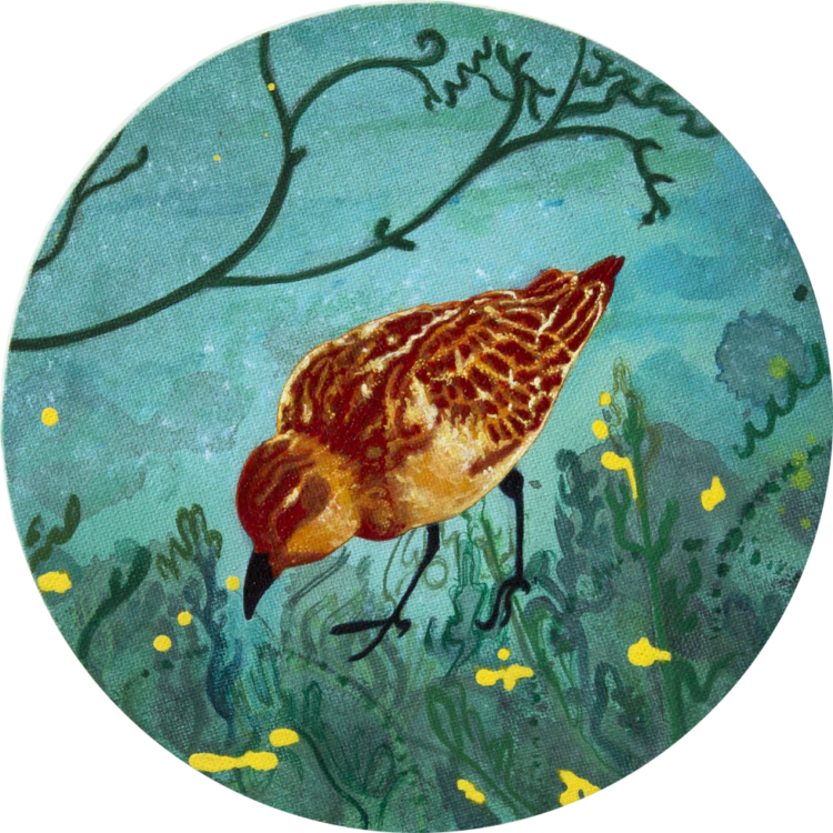 Nua Collective - Artist - Katrina Tracuma - Little stint, acrylic, ink and oil on canvas, 20cm in diameter, 2019 (Detail)