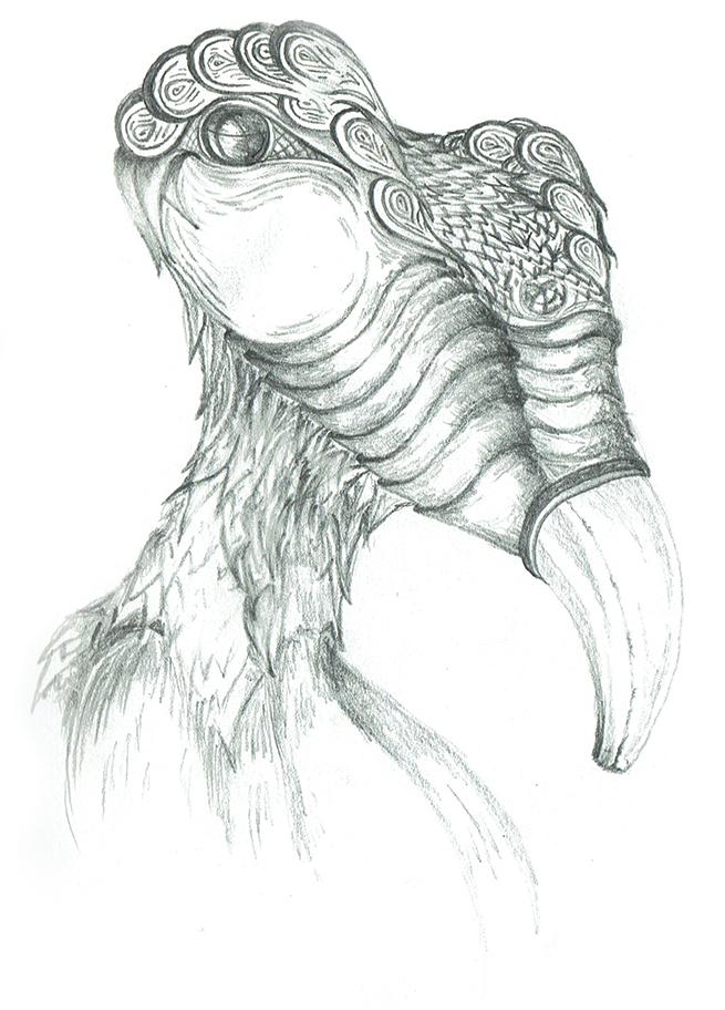 Eamonn B Shanahan - Drawings - Bird - Nua Collective - Artist