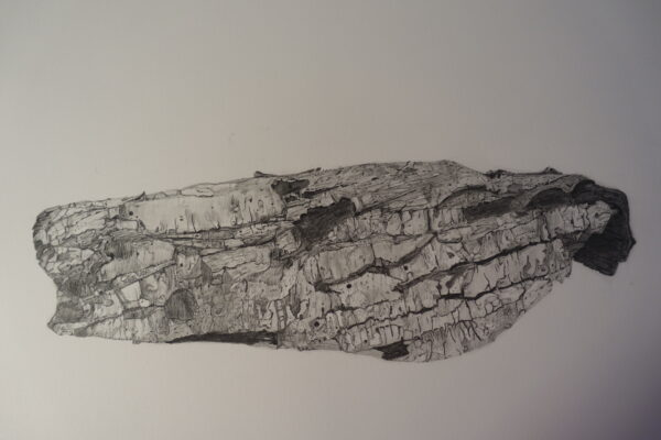Soliphillia IV - Carol Healy - Nua Collective - Artist